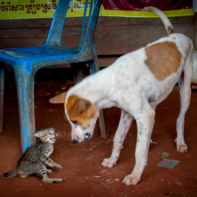 A tiny kitten and large dog