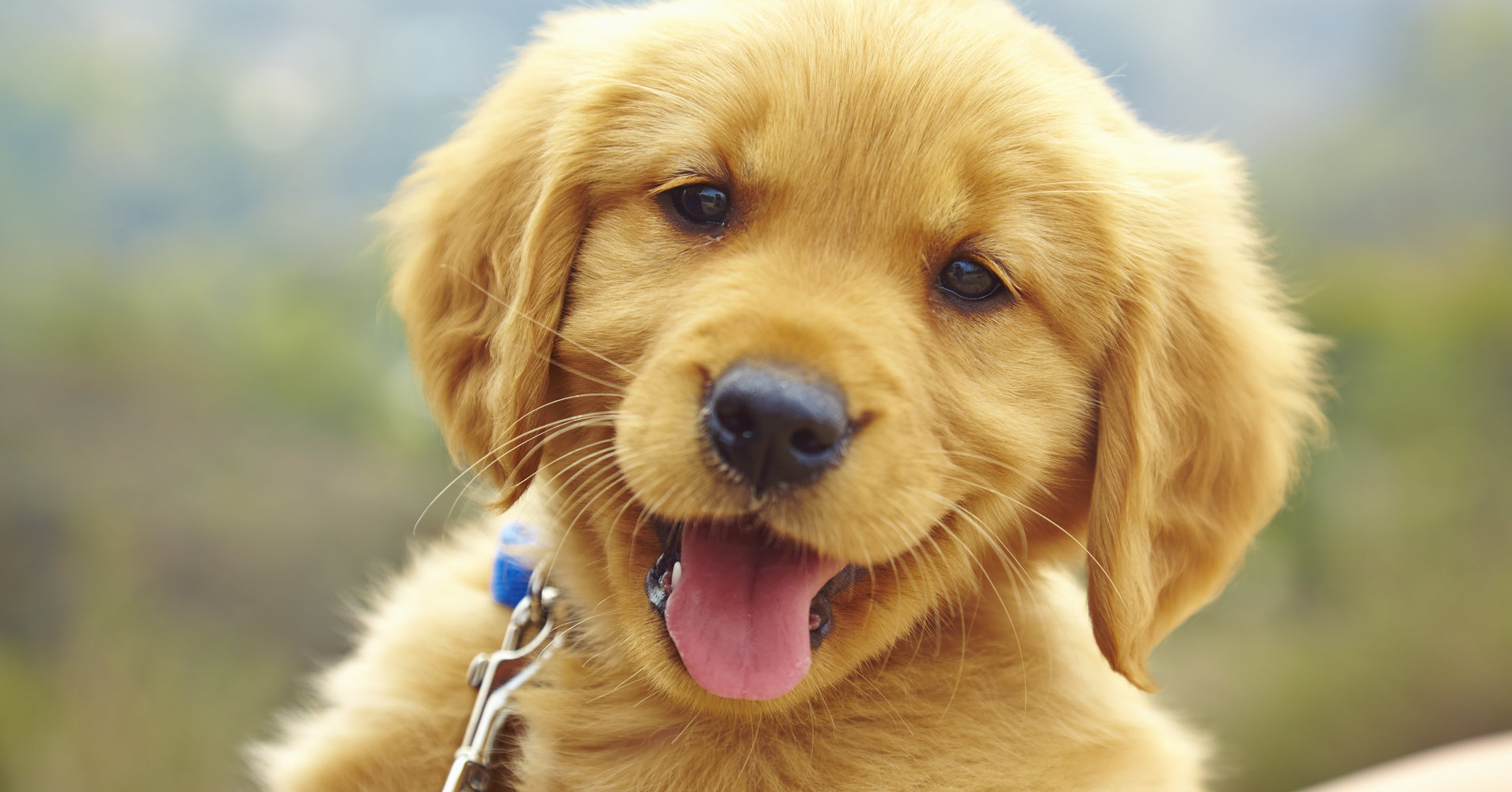 National-Puppy-Day-March-Holiday