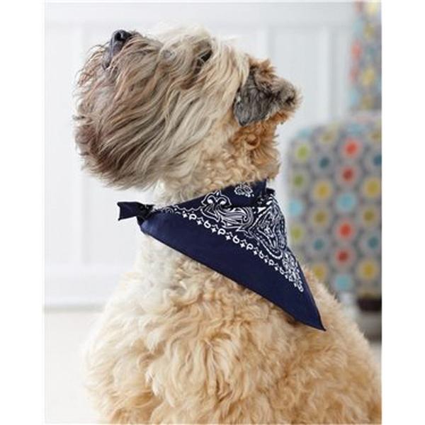 cute-schnauzer-dog-with-custom-bandanas